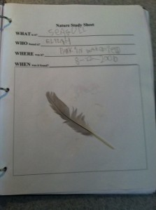 A feather we found