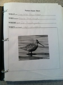 A sample page. The picture is off the internet. The bird was a pretty cool find though -- a dowitcher in our own backyard.